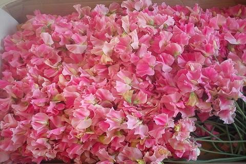 Lillehernes - Lööra lilled