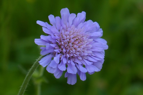 Muud hooajalised lilled - Lööra lilled