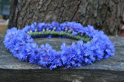 Rukkilill - Lööra lilled